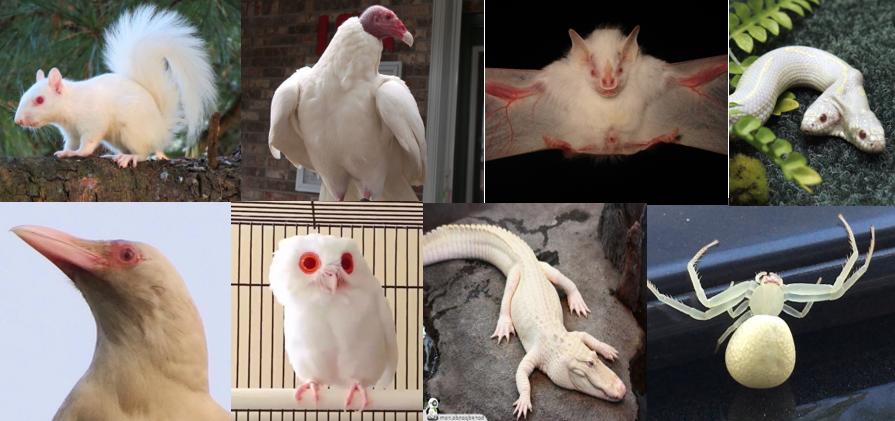 Name:  albinos.PNG Views: 13 Size:  923.0 KB
